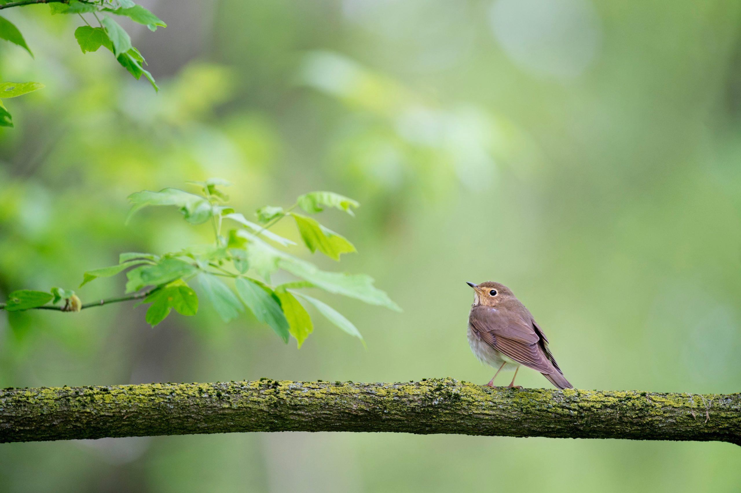 Dalda bir kuş resmi